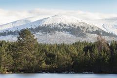 在幽谷Feshie的Sgor Gaoithe山在苏格兰的Cairngorms国家公园 免版税库存照片