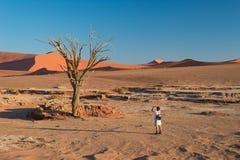 在庄严沙丘围拢的风景结辨的金合欢树的旅游采取的照片在Sossusvlei,纳米比亚沙漠, Namib Naukluft N 免版税图库摄影