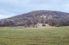 在庄稼领域的森林 库存照片