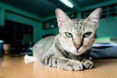 在床上的一只可爱的可疑猫 免版税库存图片