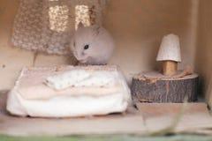 在床上的小的滑稽的仓鼠在小想象得在家 仓鼠的小家 啮齿目动物的卧室 免版税库存图片