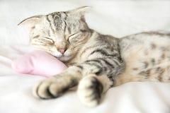 在床上的微笑的猫睡眠 免版税库存图片