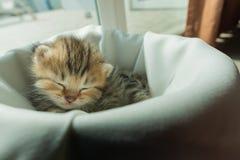 在床上的懒惰猫 免版税库存图片