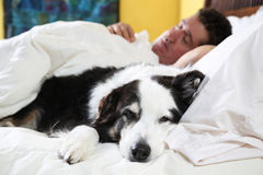 在床上的狗在他睡觉的所有者旁边 免版税图库摄影