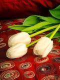 在床上的白色郁金香 免版税库存图片