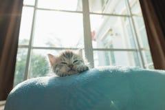 在床上的逗人喜爱的小猫 免版税库存照片