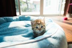 在床上的逗人喜爱的小猫 库存照片