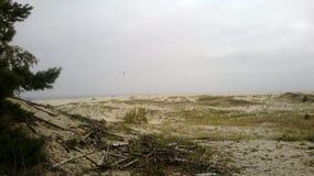 在库尔斯沙嘴的沙丘 库存图片