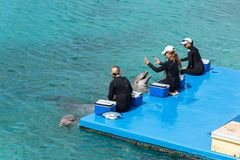 在库拉索岛水族馆的海豚展示 免版税库存照片