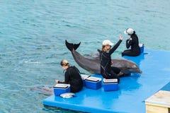 在库拉索岛水族馆的海豚展示 免版税库存图片