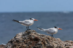 在库拉索岛加勒比岛附近的看法 图库摄影