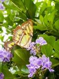 从在底下的黄色蝴蝶 库存照片