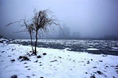 在底特律河江边的孤零零树在冬天, 2017年12月24日 免版税库存照片