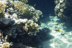 在底部的珊瑚岩石 免版税库存图片