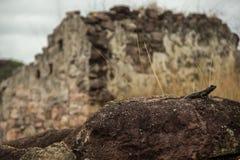 在废墟前面的蜥蜴在Igatu,Chapada迪亚曼蒂纳 免版税库存图片