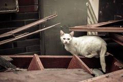 在废墟的猫 免版税库存照片
