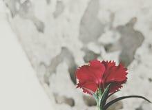 在废墟的花蕾 库存图片