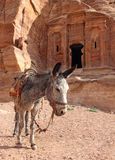在废墟附近的孤立驴 库存照片