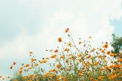 在庭院中间的橙色花 免版税库存照片