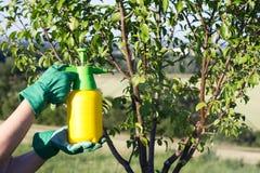 在庭院使用有杀虫剂的手喷雾器 库存照片