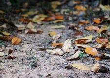 在庭院地板上的干叶子 免版税库存照片