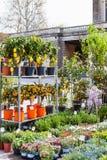 在庭院市场上的装饰树在帕多瓦 免版税库存照片