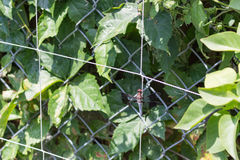 在庭院格子栖息的蜻蜓 免版税库存图片