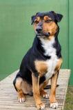 在庭院桌上的狗 免版税库存图片