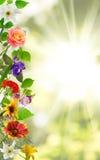 在庭院特写镜头的不同的美丽的花 免版税图库摄影