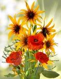 在庭院特写镜头的不同的美丽的花 库存图片