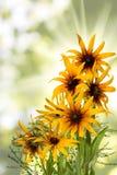 在庭院特写镜头的不同的美丽的花 免版税库存照片