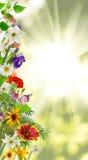 在庭院特写镜头的不同的美丽的花 免版税库存图片