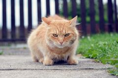 在庭院的好的猫 免版税库存照片