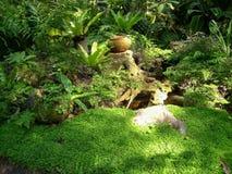 在庭院的树 免版税库存图片