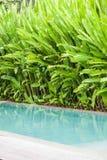 在庭院的游泳池 库存照片