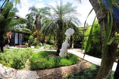 在庭院的白色兰花 免版税图库摄影