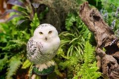 在庭院的白色多雪的猫头鹰 库存图片