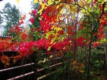 在庭院的角落在秋天 库存图片