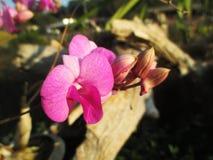 在庭院的紫色兰花 免版税库存照片