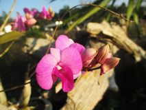 在庭院的紫色兰花 免版税库存图片