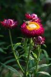 在庭院花的蜂 库存照片