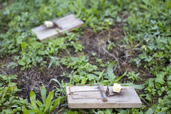 在庭院草坪的鼠标陷井 图库摄影