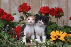 在庭院设置的逗人喜爱的3只星期的小小猫 免版税库存图片