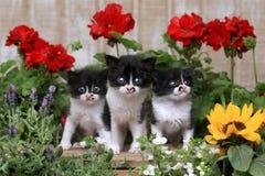 在庭院设置的逗人喜爱的3只星期的小小猫 库存图片