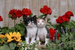 在庭院设置的逗人喜爱的3只星期的小小猫 免版税图库摄影