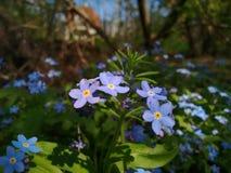 在庭院里开花蓝色 免版税图库摄影