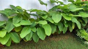 在庭院里排队的树 免版税库存图片