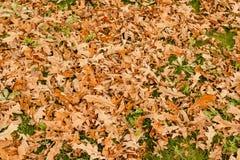 在庭院里烘干在草、草坪或公园,温暖的颜色,秋天心情的下落的秋叶,你好11月,秋天风景 免版税库存照片