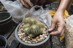 在庭院里种植一个美丽的仙人掌 免版税库存照片