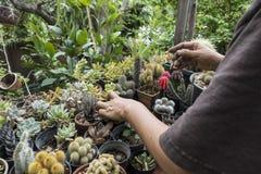 在庭院里种植一个美丽的仙人掌 免版税库存图片